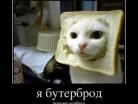 кулинарный демотиватор salatik.com.ua